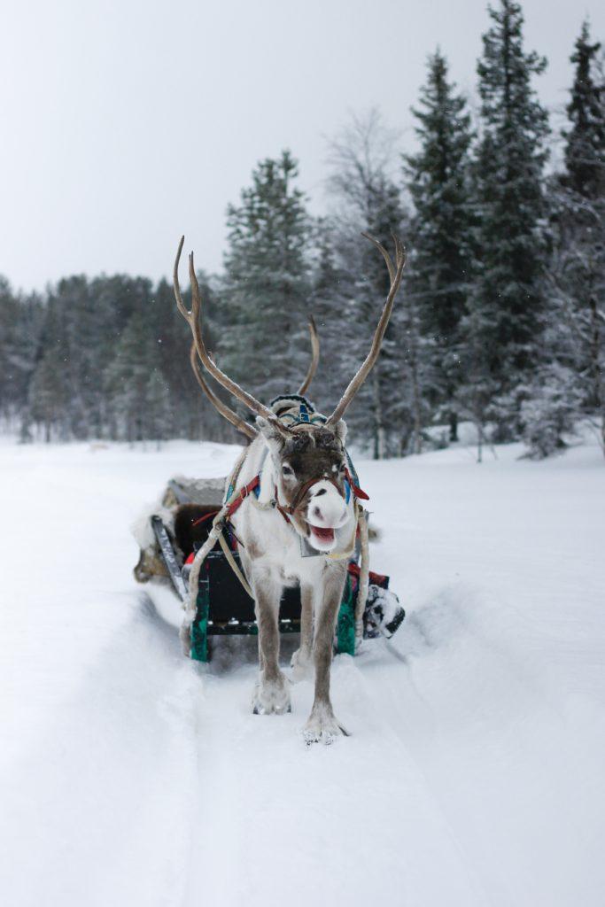 Sneeuwsafari Lapland - Sneeuwvakanties | 2Travel - Reisbureau Putte