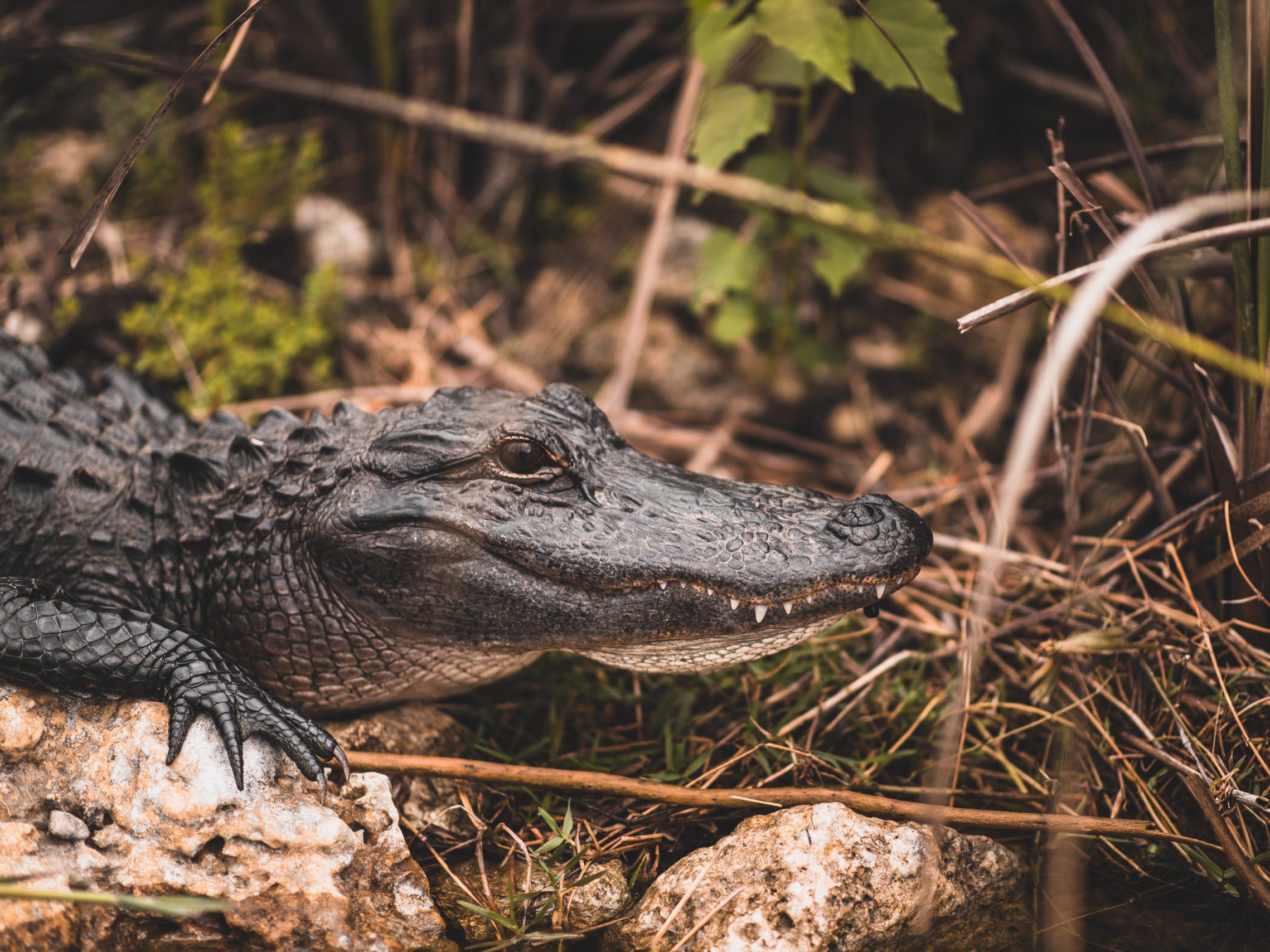 Everglades - Fly & drive Rondreis Florida | 2Travel - Reisbureau Putte